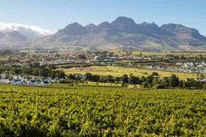 Stellenbosch30
